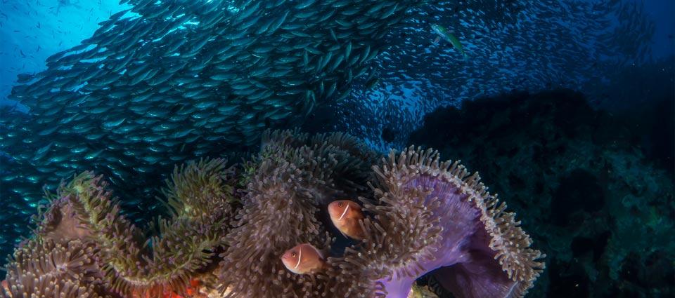 IDC Reef Sairee Cottage Diving Koh Tao Thailand
