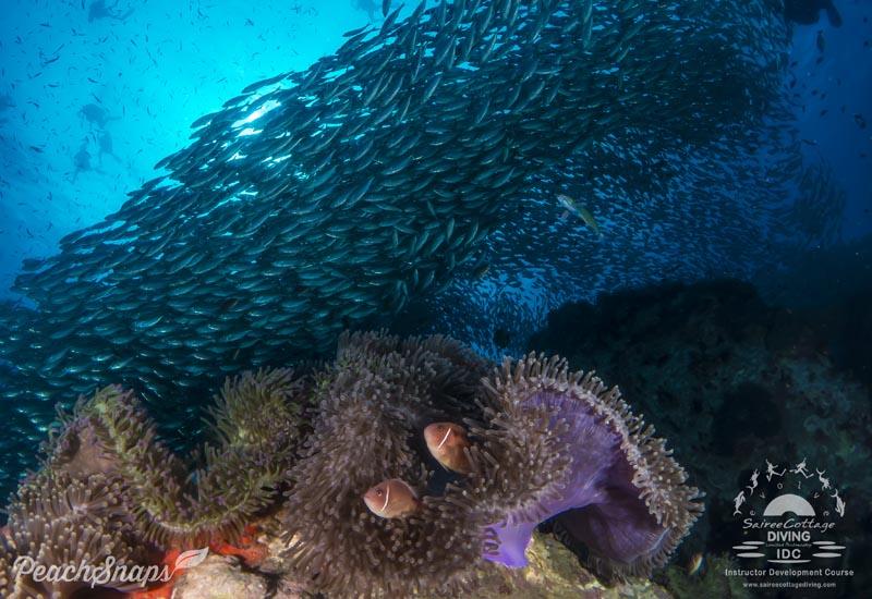 Best MSDT Diving Training Dive Sites Thailand